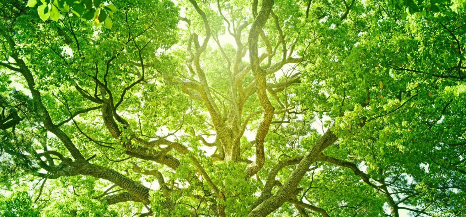 W trosce o zielony świat